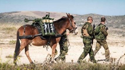 La OTAN ensalza a la mula murciana, el 'arma secreta' de la infantería de montaña alemana