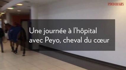 Une journée à l'hôpital avec Peyo, cheval du cœur