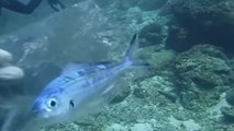 Pollution marine : du plastique découvert jusqu'à 11km de profondeur