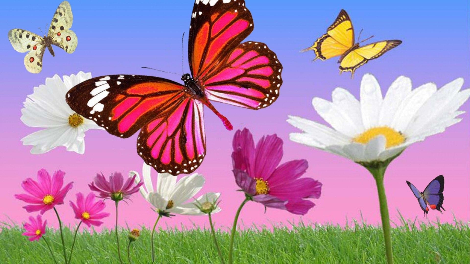 Anny Versini Jean Marc Versini Les Papillons Et Les Fleurs Clip Officiel