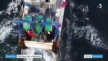 Pêche : les dauphins victimes des chalutiers