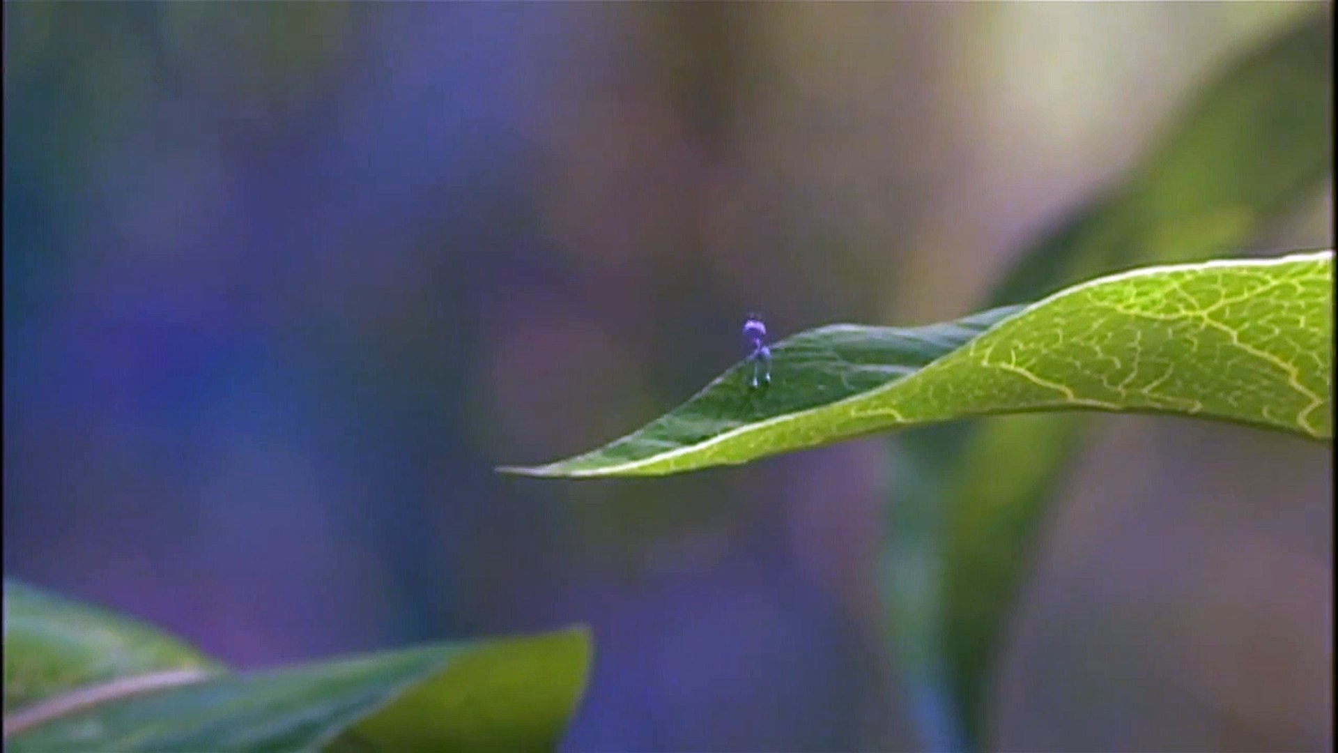 A Bug S Life Movie 1998 Video Dailymotion