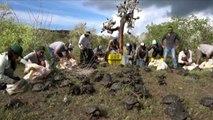 Galàpagos, liberate 155 tartarughe giganti nell'isola di Santa Fe