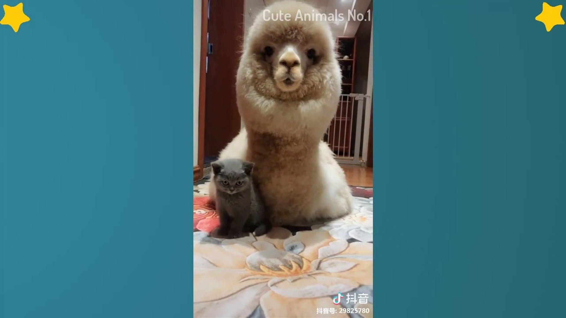 Tiktok Cat - Tik Tok Pets - Tik Tok Funny Dog - Tik Tok Animals #20
