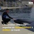 Manifestation contre Marineland, chien disparu, Festival de Cannes au cinéma: voici votre brief info de mardi après-midi