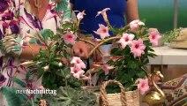 Imke Riedebusch Weihnachtsdeko.Nordstil Dekoration Imke Riedebusch Video Dailymotion