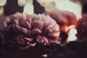 Quelles fleurs pour la Toussaint ?