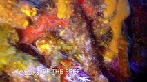 Cozumel Diving Photography - The Reefs of Cozumel