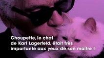 Mort de Karl Lagerfeld : on sait ENFIN qui va s'occuper de Choupette