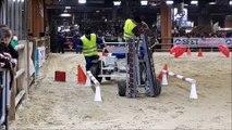Concours du Trait d'avenir : une deuxième place pour le cheval comtois