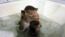 Une macaque et son petit prennent un bain !