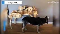 Bizarre Dog Petting Machine - For Large Breeds Only