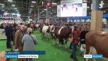 Salon de l'agriculture : 633 000 visiteurs pour l'édition 2019
