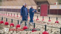 Pas-de-Calais : un projet d'élevage industriel de poulets contesté