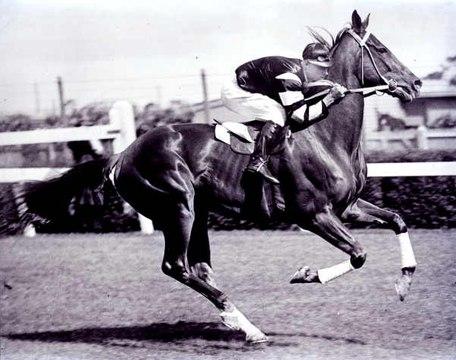 Herkunft von Pferden: Das Vollblut