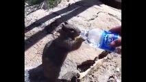 Compilation d'animaux sauvages assoiffés qui demandent à boire