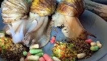 Un timelapse d'escargots en plein festin !