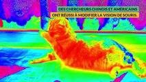 Des souris qui voient dans l'infrarouge
