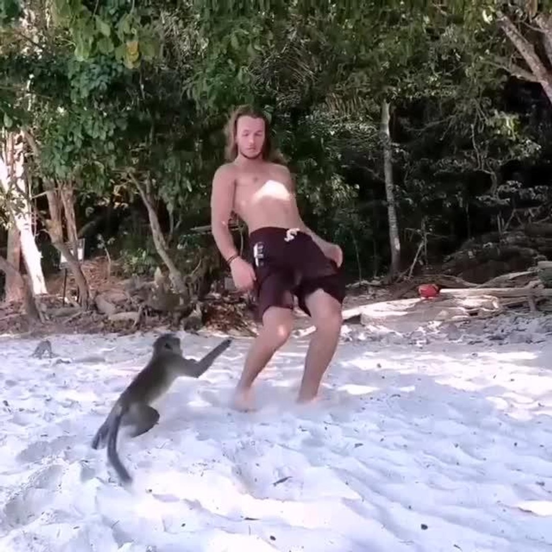 Monkeys Look Displeased at Man Doing Front Flip at Beach
