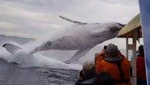 Ces touristes vont assister à un saut de baleine incroyable
