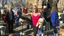 Dogs stage Brexit protest outside Parliament