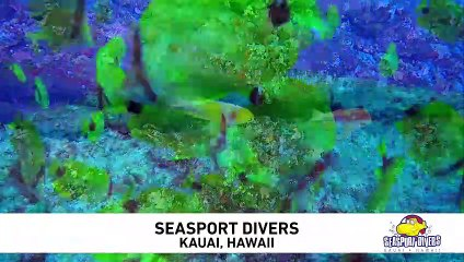 Seasport Divers Signature Dive at Lehua Rock