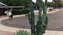Dog and Coyote Make Perfect Play Pals