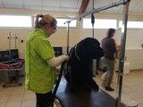 Les élèves de la MFR de Semur-en-Auxois apprennent à toiletter les chiens