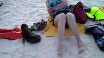 Un bébé lion de mer rend visite à des touristes sur la plage - Gardner Bay, iles Galapagos
