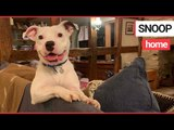 Dog named Snoop after rapper offered to adopt him when he abandoned is rehomed | SWNS TV