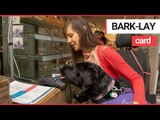 Assistance dog helps a young disabled woman pay for her shopping! | SWNS TV