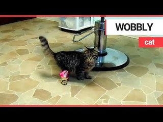A wobbly kitten can now walk straight thanks to 3D printing technology | SWNS TV