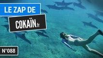 Le Zap de Cokaïn.fr n°088