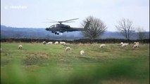 Sheep not afraid of low-flying Apache attack helicopter in north England