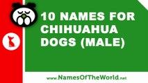 10 chihuahua male dog names - the best pet names - www.namesoftheworld.net