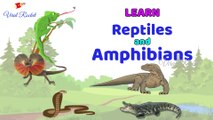 Learn Reptiles and Amphibians for Kids || Reptiles For Children in English | Amphibians names For Kids In English ||  Viral Rocket