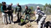 Sud-Ardèche : 10000 pins de Salzmann plantés dans la forêt de Banne