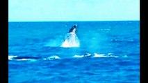 Big Whale Migration