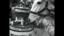 Christmas Cake For Sick Animals