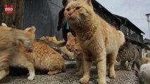 Aoshima: Japanese Cat Island