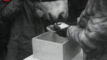 1930's News Clip: Christmas Cake for Sick Animals