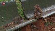 Baboon Adopts a Bushbaby