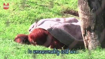 Animals Keep Warm In Blankets