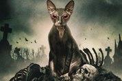 Pet Graveyard movie clip - The cat
