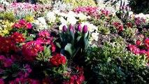 Zoo de Mulhouse : les nouveautés du marché aux plantes