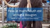 Un mammouth dans les Deux-Sèvres