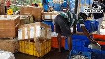 Odisha fishermen's plight.mp4