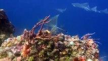Scuba Diving Caribbean - The Reefs of Cozumel