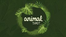 Animal Tarot  by The Other Brothers - Magic Trick