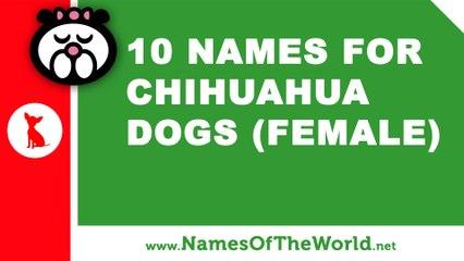 10 chihuahua female dog names - the best pet names - www.namesoftheworld.net